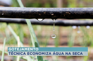 CITE Bela Vista utiliza técnica de gotejamento de água em sua Horta Comunitária.